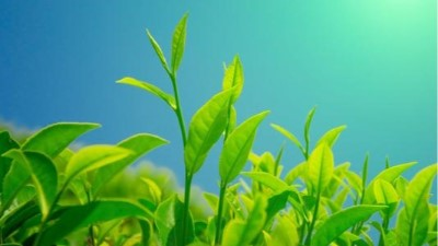 工业除湿机在茶叶制作工序中的应用